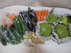 日南野菜4