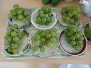 ブドウ収穫2